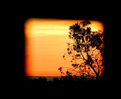 Happy Friday (missgeok) Tags: lighting light tree art colors beautiful composition sunrise fence spectacular happy golden lightandshadows amazing nice nikon warm pretty colours view artistic pov creative silhouettes australia frame presentation colourful framing framework friday goodmorning fri weekday hff colourtones throughthefence wellcomposed angleofview endoftheweek happyfencefriday beforeweekend daybeforesaturday