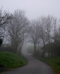 On a misty day in Stokkeby (Jaedde & Sis) Tags: road trees mist fog bigmomma challengeyouwinner 15challengeswinner challengegamewinner friendlychallenges challengefactorywinner thechallengefactory fotocompetition fotobronze fotocompetitionbronze herowinner pregamesweep pregameduelwinner