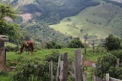 3 (23) (Fausto Faé) Tags: brazil horse brown verde green brasil fence landscape hill tranquility paisagem sp cerca paulo marron cavalo tranquilidade são morro joanópolis brownhorse cavalomarron