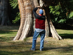 Man and Tree (knightbefore_99) Tags: park camera wood city man tree art vancouver forest photo photographer bc fir stanleypark