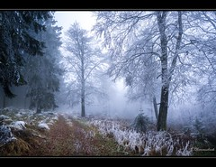 first glimpse of winter (bernd obervossbeck) Tags: winter tree fog forest landscape frost nebel path hoarfrost landschaft wald bume baum raureif weg sauerland whitefrost hochsauerland jagdhaus mygearandme mygearandmepremium mygearandmebronze mygearandmesilver mygearandmegold mygearandmeplatinum mygearandmediamond