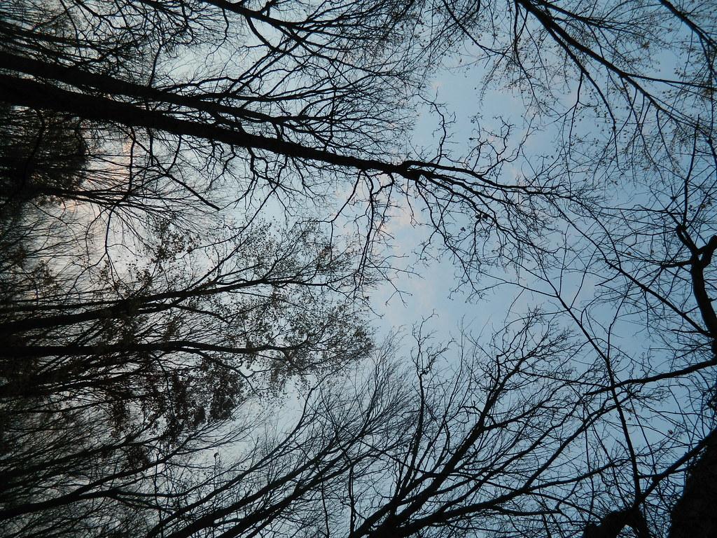 morning light through the canopy