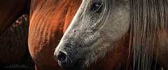 Rapa de Bestas e Garaones (LuzLux) Tags: caballo galicia rapa bestas aeromedia luzlux