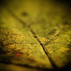 Path (Marjarah) Tags: autumn abstract macro square leaf nikkor105mmf28gvrmicro