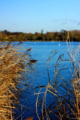 Aquadrome (Phil Everett Photography) Tags: lake water reeds reserve grasses aquadrome
