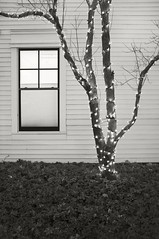 Holiday Lights and Window (frntprchprss) Tags: blackandwhite tree window massachusetts christmaslights lit southhadley holidaylights blackwhitephotos jamesgehrt