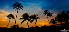 Sugar Sunset (Glen Thuncher) Tags: longexposure sunset beach hawaii nikon silhouettes maui palmtrees pacificocean le fullframe fx nationalgeographic kihei d800 sugarbeach colorefexpro nikond800 leebigstopper nikkor1635mmf4lens
