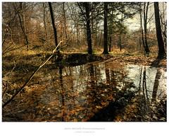 La serre automne 2012 (Jeff BOVE) Tags: tree water leaves yellow forest jaune eau jura braun franchecomt fort brun feuilles serre amange gredisans