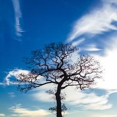 ~ the tree in the car park ~ (Janey Kay) Tags: tree silhouette treesilhouette angleterre arbre baum wispyclouds blueskyday winterhiver november2012 atreeinwinter sonycybershotrx100 novembre2012