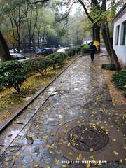 因为在下雨,又是冬季,所以地面上全是金灿灿的叶子。