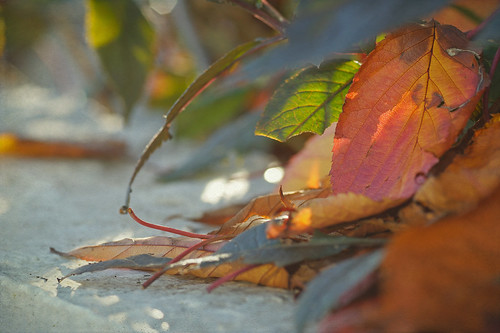 Autumn leaves and dappled light