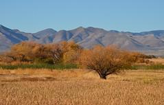 Whitewater Draw, Cochise Co., AZ (autrevie) Tags: mulemountains cochisecountyarizona whitewaterdrawwildlifearea
