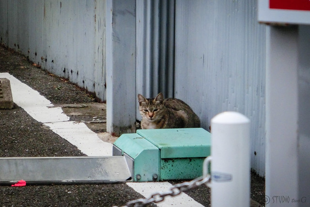 Today's Cat@2012-12-02