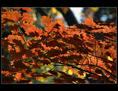 Sunlight and autumn leaves ... (bbic) Tags: park november autumn light nature leaves nikon colours natura toamna bucharest bbic frunze parculcarol