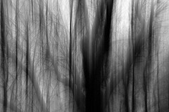 la piega delle cose (enki22) Tags: abstract tree nature natura explore minimalism conceptual icm piega intentionalcameramovement enki22