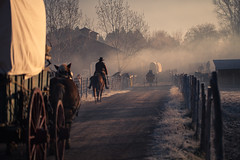Westward (Standard Deluxe) Tags: morning winter horse man tree fog fence wagon haze cowboy 100mm western cinematic dirtpath canonef100mmf28lisusm 10028lis
