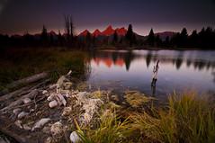 Red Dawn_DSC8856 (antelope reflection) Tags: color reflection sunrise pond wyoming schwabacherlanding tetonnationalpark nikond90 tamron1024