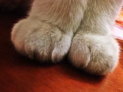 Gatto di classe (piris*) Tags: light italy 3 cute love animal cat colori gatto bianco classe vita jobbe particolarmente