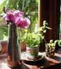 Na cozinha (Santinha - Casas Possíveis) Tags: natal orchidaceae pinecone orquídeas cones pinhas revellion bouganville decoraçãodemesa orquídeassecas órkhis arranjosnatalinos dez2012 decoraçãoanonovo