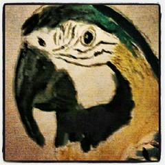 Macaw (Kleckerlabor) Tags: art illustration print kunst fine moderne prints künstler malerei gemälde kunstmarkt realismus fineartprint zeitgenössische bildende kunstdruck kunstmaler kunstbilder flickroid