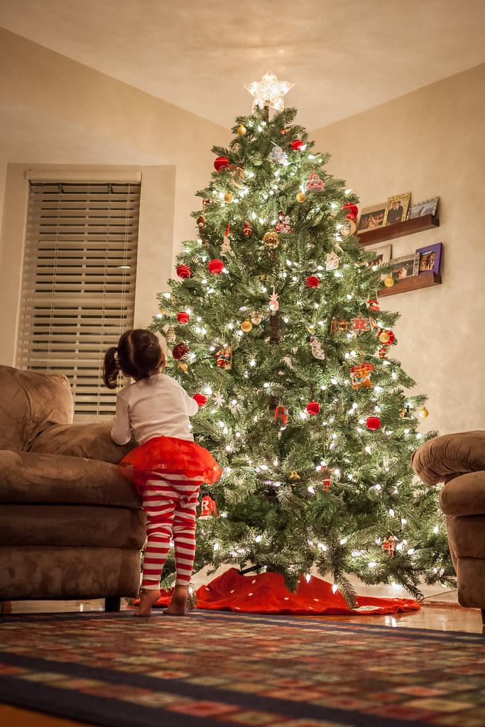 Miss Tree Inspector