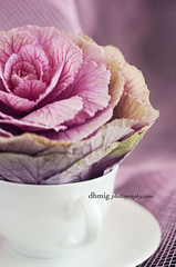 Unusual beauty (dhmig) Tags: pink stilllife flower cup coffeecup feminine cabbage whitecup beautyinnature cabbageflower whitecoffeecup layears