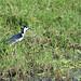 Varietà di uccelli tra Lorica e Monteria (3)
