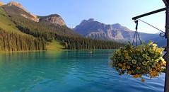 Emerald Lake (vic_206) Tags: emeraldlake canada lago agua water flores flowers montaas mountains paisaje landscape canoneos60d tokina1116f28atxprodx