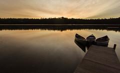20160720-IMG_1737.jpg (Gary Phillips2010) Tags: pinewoods