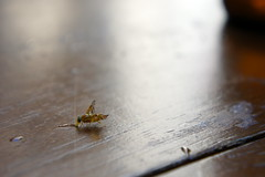 A taste of Cachaa. (Amy Fenn 2) Tags: cachaa insect