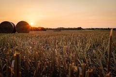 Strohballen (Tobias Kroeger) Tags: feld getreide hamburg landschaft sommer sonne sonnenuntergang stoppelfeld stroh sundown sunset