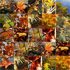 Automn (nathaliedunaigre) Tags: automne automn leaves feuilles ville city town feuillesmortes feuillages arbres btiments colors couleurs carr square collage montage composition