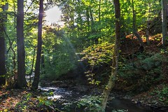 Sun rays shining through green leaves on a river (tomaskriz1) Tags: river leaves shining sunrays trunk romantic morning surface mirroring moravian water view valley tree sky scene rural nature natural leaf landscape green grass forest country beautiful background