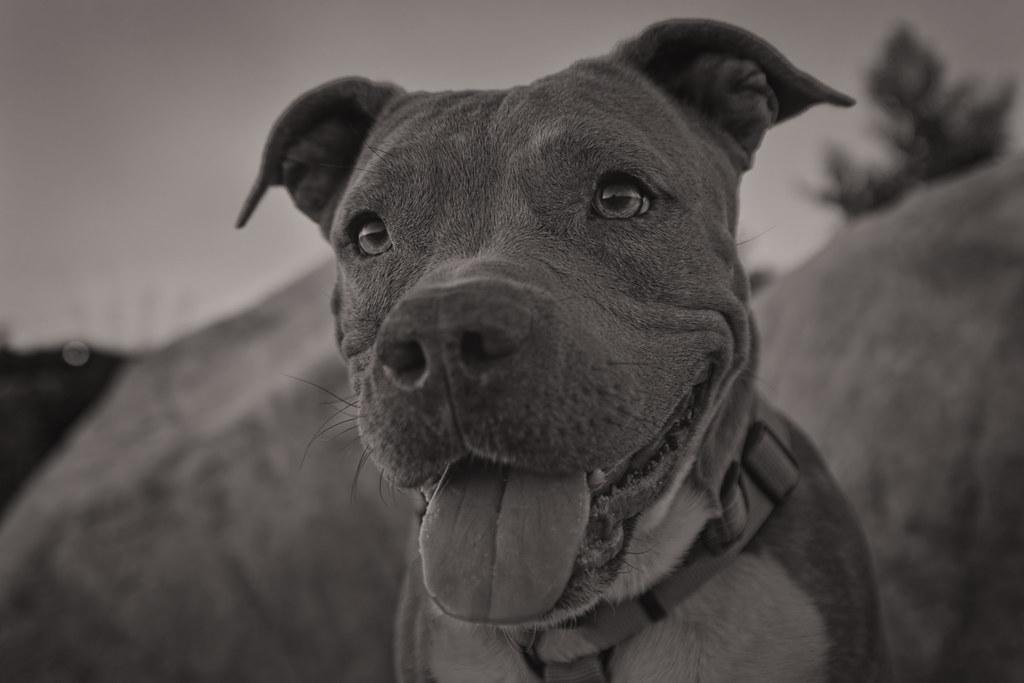 tamron28300mmf3563divcpzd dog dogs domestic domesticanimal pet pets ...