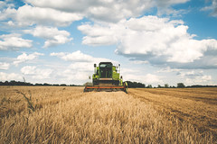 Harvest (freestocks.org) Tags: agricultural agriculture barley combine countryside cultivate cut dry dust equipment farm farming field food golden grain grow growing growth harvest harvester harvesting horizon industry land landscape machine nature reaping ripe rows rural rye scene stems straw sun threshing wheat work yellow