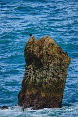 18092016DSC_1175.jpg (Ignacio Javier ( Nacho)) Tags: facebook pginafotografia cormoranes aves phalacrocoracidae flickr faunayflora santander cantabria espaa es