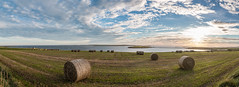 The Harvest (MBDGE) Tags: orkney scenery sea sun sunset wave water sky cloud seascape panoramic canon bales field light scotland alba uk europe scapa flow northsea
