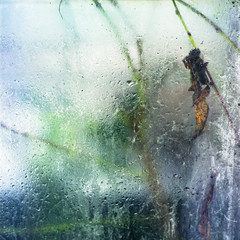 Frozen memories #1 (NoraFL) Tags: winter plant glass norway analog frozen greenhouse bronica memory damp s2