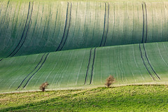 On a Roll (S l a w e k) Tags: uk autumn trees england abstract green rural landscape sussex countryside nationalpark afternoon britain country east hills kingston telephoto rolling southdowns lewes bucolic undulating falmer coldcombes