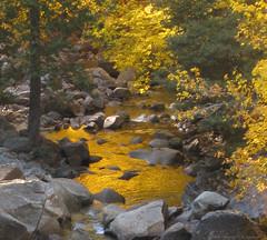 Merced River (monique.m.kreutzer) Tags: autumn trees fallleaves fall river fallcolor yosemite yosemitenationalpark mercedriver