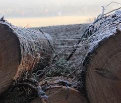 Online (:Linda:) Tags: mist germany log village hoarfrost spiderweb thuringia brnn rauhreif lumberpile