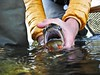Montana Fly Fishing Lodge - Bozeman 14