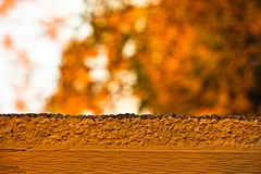 99/365: Peek! (Samutsim) Tags: wood texture canon eos dallas bokeh fallcolors dfw gravel canonef50mmf18ii project365