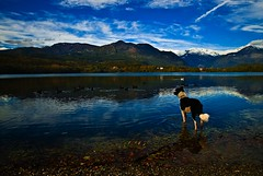 Lago&Doc (erripollo) Tags: autumn dog lake cane montagne lago autunno riflesso muntains