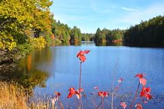 CSC_7313 (johnjmurphyiii) Tags: statepark autumn usa connecticut bigelowhollow stateforest nipmuck 06076 johnjmurphyiii