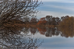 My Shot Of The Day (me'nthedogs) Tags: reflections somerset naturereserve levels westhay