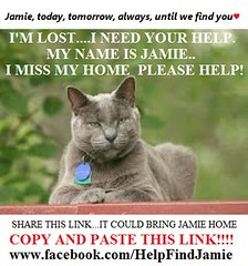 I'm Lost..I Need Your Help (Jamie's Team) Tags: cat lost lostcat wwwfacebookcomhelpfindjamie