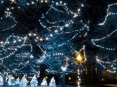 Christmas Nearly Visible (bill.d) Tags: christmas nightphotography light usa tree fall outside outdoors evening streetlight michigan unitedstatesofamerica tripod decoration infrared kalamazoo fullspectrum chdk photoacutestudio canona590is 590nm