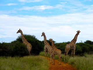 Namibia Luxury Hunting Safari 96
