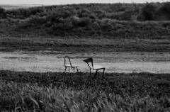 Two (Irene Stylianou) Tags: two blackandwhite bw slr abandoned film nature analog 35mm chair nikon europe chairs song cyprus seats nikonfm10 filmcamera nikkor fm10 ilfordxp2 ilford analogphotography larnaca ryanadams songlyrics filmphotography nikoncamera blackandwhitefilm naturescene nikkor3570mm ilfordfilm filmdatabase nikkor3570mmf3548 irenestylianou truebloodsoundtrack ittakestwowhenitusedtotakeonlyone